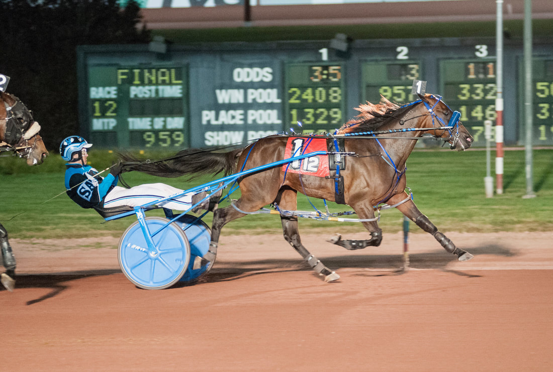 Maxdaddy Blue Chip harness horse