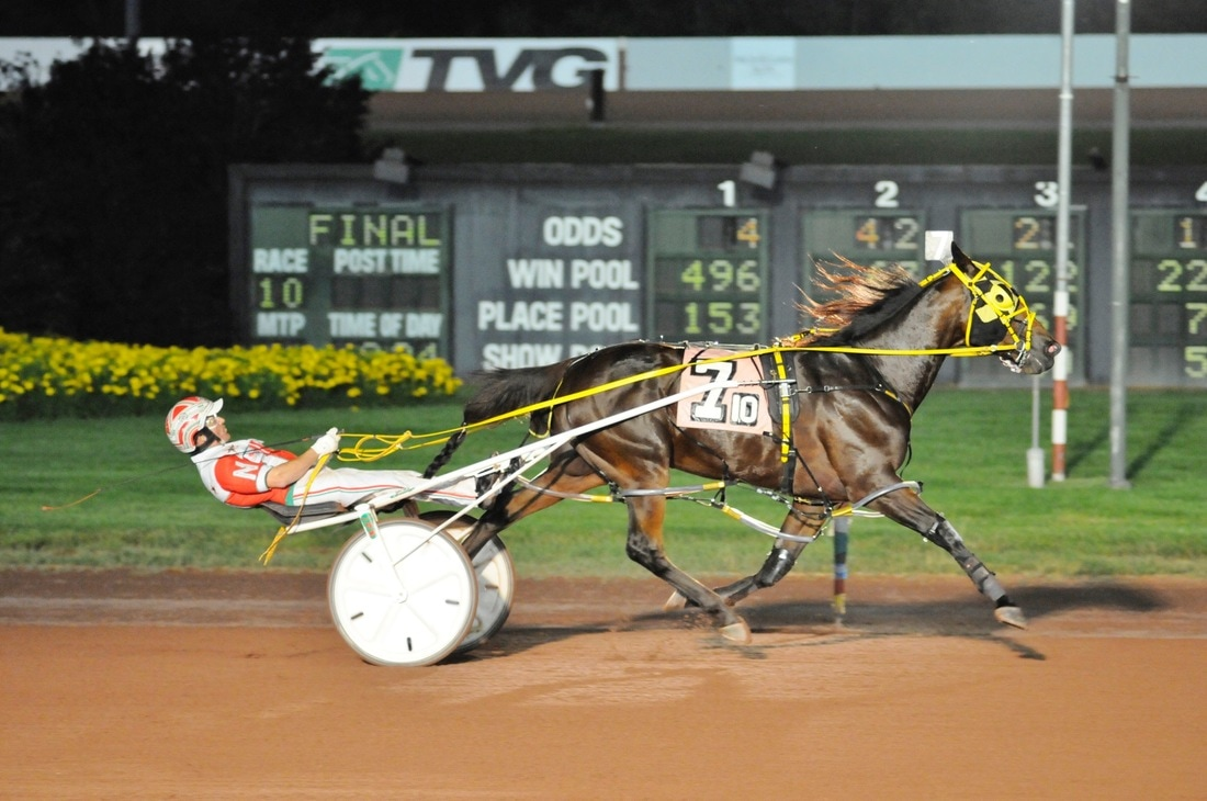 Tell Us More Is Top Harness Horse Of 2017 So Far